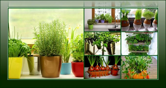 Original and unusual ways as it is possible to grow herbs in the kitchen
