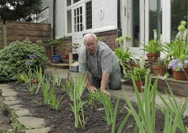 Iridary - how to create a beautiful Iris Gardens on the site