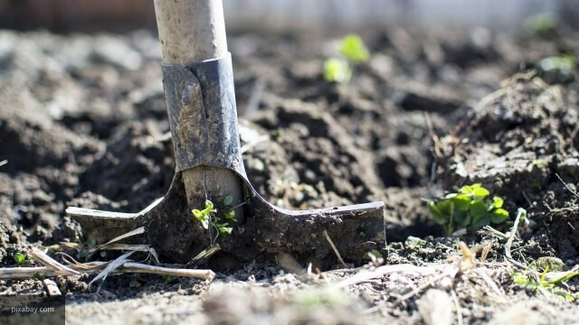 Why not dig a vegetable garden in the fall: 5 Reasons