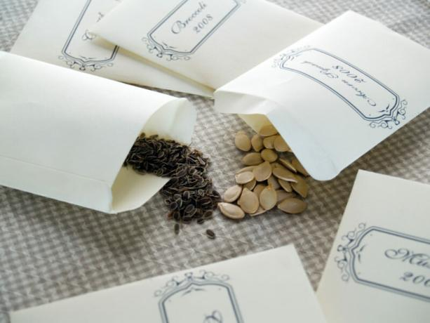 Need to purchase seeds from a qualified vendor to comply with terms of storage, do not use cheap raw materials. Illustration for an article is used for a standard license © ofazende.ru