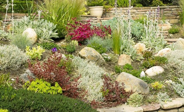 Rockery in your area: types and characteristics