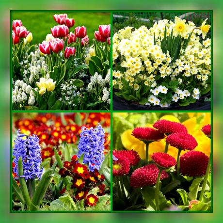 What kind of flowers to plant your flower bed, if you want it to be blooming from early spring until late autumn