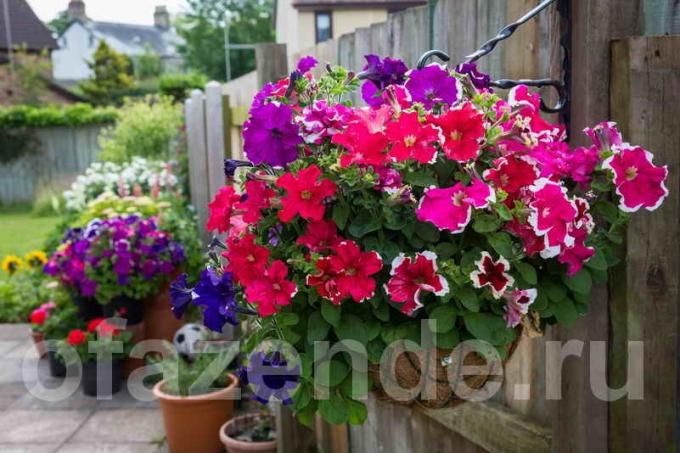 Garden containers in their own hands: Tips gardeners