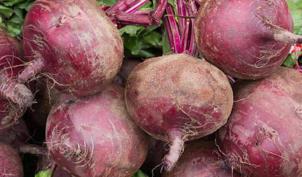 7 principles of long-term storage of beet