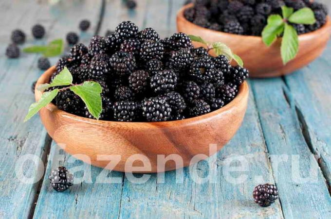 Blackberry for your garden: types, description and cultivation