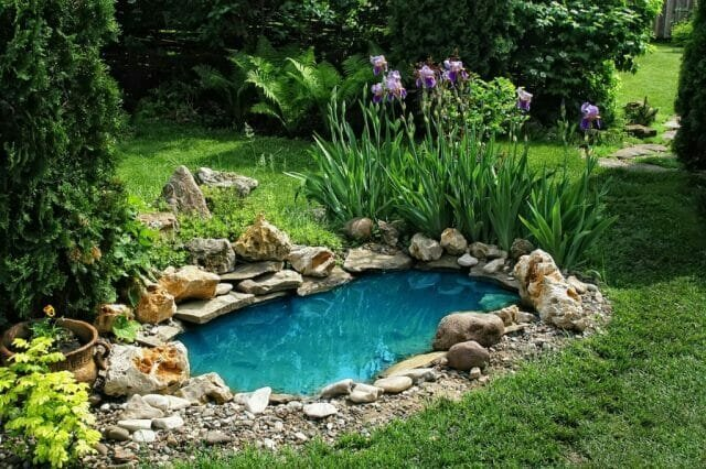 Pond: installation, plant selection - advice to gardeners