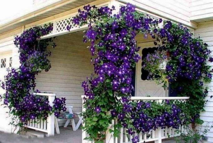 Blooming pyramid of plants on your balcony: Tips gardeners